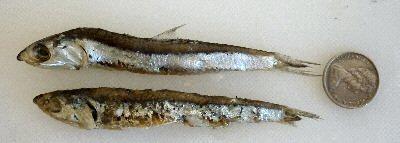Bait: Fishing at Lake Tyers Beach