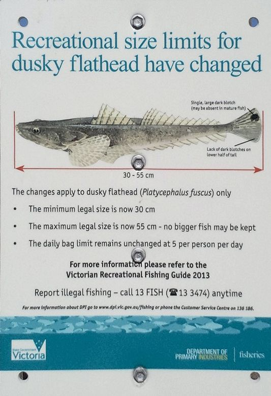 Fish ruler sticker victoria kamos sticker for Fish size limits