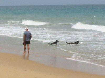 walking the dog lake tyers beach. Black Bedroom Furniture Sets. Home Design Ideas