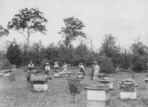 Bee Hives at Lake Tyers