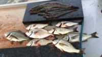 Roy C and Family's Catch Easter 2015 Lake Tyers